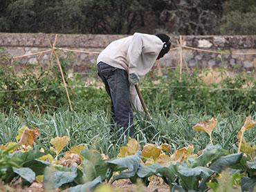 Cultivo ecológico e integración