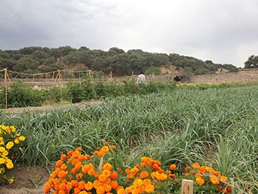 Una vista del huerto Hermana Tierra